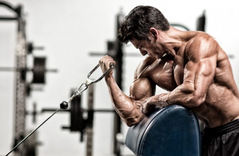 Best basic and isolation biceps exercises for all bodybuilders